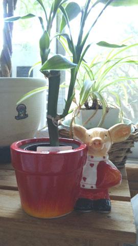 この植木鉢お気に入りです。