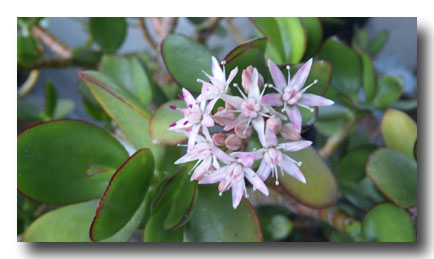 プランターの春の花