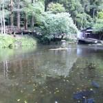 高千穂峡の池2