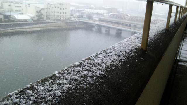 今日は雪ですねぇ。