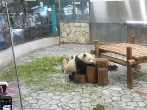 遊んでますパンダ