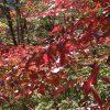 2018年 秋の紅葉を観に奈良県の大台ケ原へ。でも、すでにちょっと遅かったかな^^;
