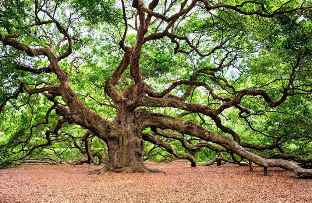 人生の枝刈り。無駄な時間や答えの出ない考えは止めましょうか(^_-)
